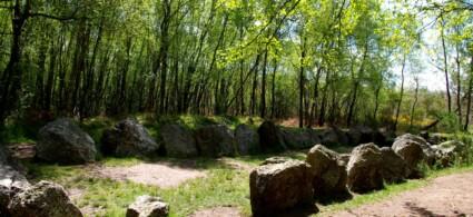 La foresta di Paimpont